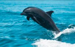 Come Spot A Dolphin
